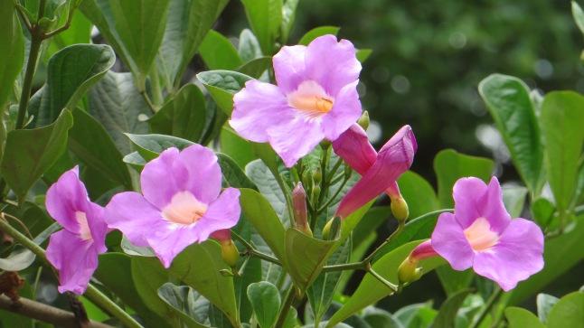 Även blommorna var naturligtvis vackra i Afrika!
